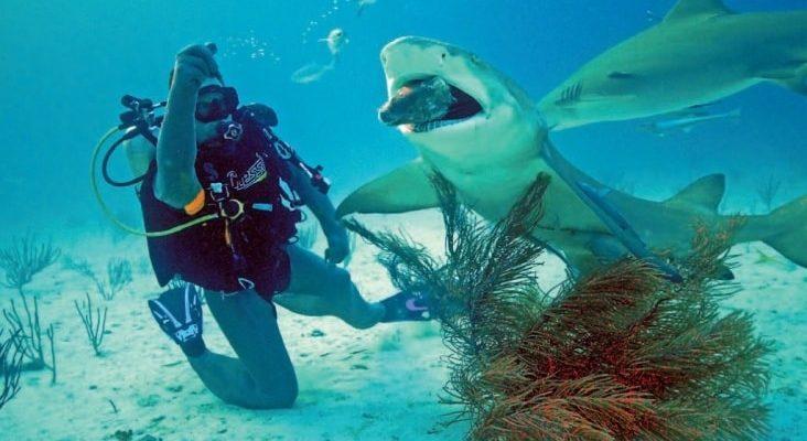 океанолог кто такой